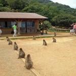 Feeding Time at Arashiyama Monkey Park