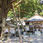 Gorakuji's (Temple 2) Cedar of Long Life and Main Hall