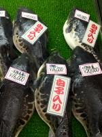 Fugu (Pufferfish)